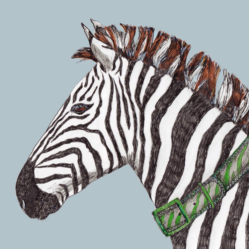 A Zebra and her Zebra Print Belt